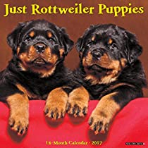 Just Rottweiler Puppies 2017 Wall Calendar (Dog Breed Calendars)