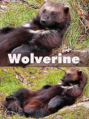 Wolverine on Amazon Prime Instant Video UK