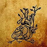 Harvest Aorta