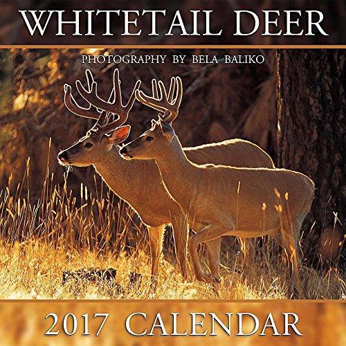 2017 Whitetail Deer Calendar - 12x12