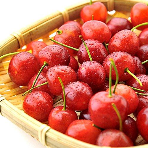 果物 ギフト 山形県産 佐藤錦 さくらんぼ 500g バラ詰め 大粒 サクランボ