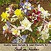 "100 Flower Seeds, Columbine ""Giant Star Mix"" (Aquilegia caerulea) Seeds by Seed Needs"