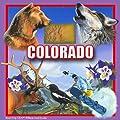 """CoasterStone SQ021 Absorbent Coasters, 4-1/4-Inch, """"Colorado"""", Set of 4"""