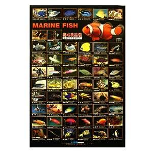 Azoo aquarium decor marine fish poster pet for Fish tank decorations amazon