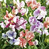 Suttons Seeds 134617 True Fragrance Sweet Pea Seed