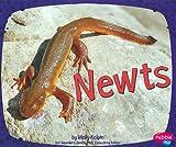 Newts (Amphibians)