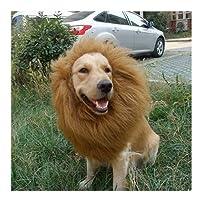 Hundekostüm Löwenmähne