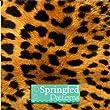 Leopard Pattern #2 1 Sheet 12x48 for Vinyl Cutters & Crafts