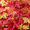 Bassion Package of Approximately 210 Assorted Mixed Fall Colored Silk Maple Leaves for Autumn Party…