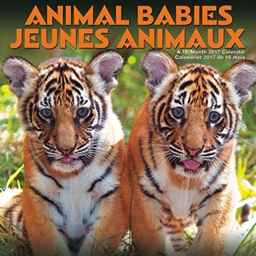 Animal Babies Bilingual 2017 16 Month Wall Calendar 12x12