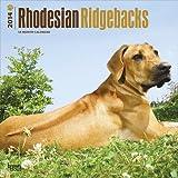 Rhodesian Ridgebacks - 18 Month 2014 Calendar - 30x30cm