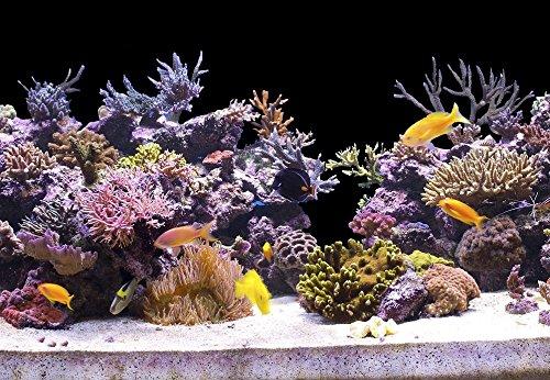 100-cm-Aquarium-Hintergrund-Folie-schwarz-40-cm-breite-hhe