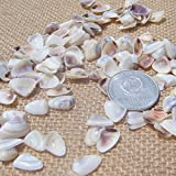 150PCS 0.5-1CM White Coconut Shell Natural Mini Shells Wall Stickers Products Shell Ornament Aquatic Scenery