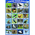 laminated KNOW YOUR BIRDS | british uk England great britain native birds | wildlife | educational poster wall chart