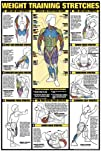 Weight Training Stretches 24 X 36 Laminated Chart