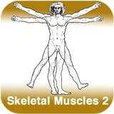 Anatomie - Skelettmuskulatur 2 - Teil 7