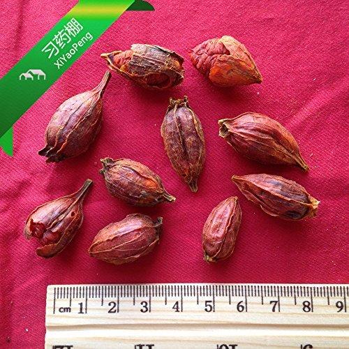 trt-zhizi-zhi-zi-fructus-gardeniae-cape-jasmine-fruit-100gram-by-tong-ren-tang