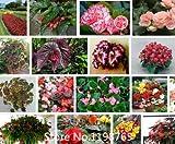 推進優れたベゴニアの種子プロモーション!24種類300PCS花の種小説シード
