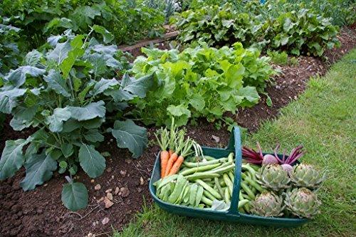 Emergency Survival Vegetable Fruit Garden Seed Heirloom Prepper Lot ...