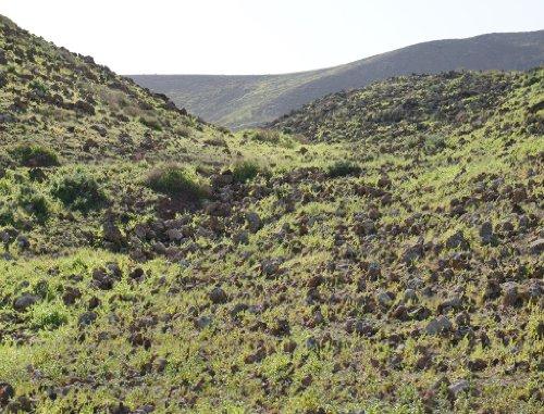 Lais Puzzle Landschaft Fuerteventura Vulkankrater 1000 Teile