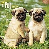 ブラウントラウト 2016年 カレンダー 壁掛け 犬 パグ・パピー 16-ZB-504187