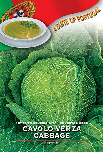 franchi-seeds-of-italy-savoy-cabbage-vertus-seeds