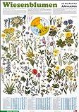Schreiber Naturtafeln, Wiesenblumen im Wechsel der Jahreszeiten