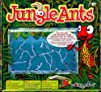 Jungle Ants Gel Habitat Kit
