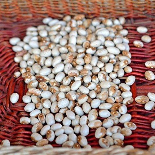vivai-le-georgiche-fagiolina-del-lago-bush-bean-semente