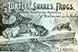 img - for The turtles, snakes, frogs and other reptiles and amphibians of New England and the north book / textbook / text book