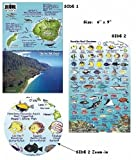 Kauai Hawaii Reef Fish and Creature Guide