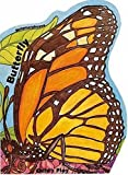 img - for Metamorphoses: Butterfly book / textbook / text book