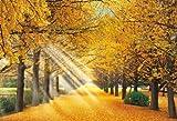 450スモールピース パズルの達人 金色の銀杏並木-東京 (26x38cm)
