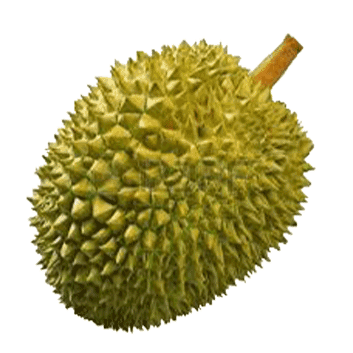 amazon com benefits of durian appstore for android clip art ant heads clip art pants