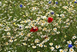 Premier Seeds Direct CCM01F 4 g Corn Chamomile Anthems Arvensis Wild Flower Seeds (Pack of 12000)