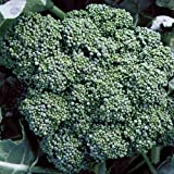 David's Garden Seeds Broccoli Calabrese EB118Q (Green) 50 Organic Heirloom Seeds