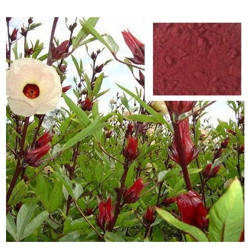 1,000 Grams. Roselle Powder, Hibiscus Sabdariffa Powder Natural From Thailand