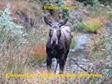 img - for Canadian Wilderness Stories book / textbook / text book