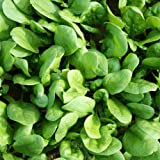 Suttons Seeds 150410 Amazon Spinach Seed