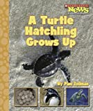 img - for A Turtle Hatchling Grows Up (Scholastic News Nonfiction Readers: Animal Life Cycles) book / textbook / text book