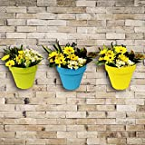 Wonderland Set of 3 High Quality PP Wall mounted & vertical garden planter / pots in Yellow , Blue & Green ( Nail & accessories included)