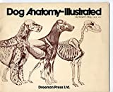 img - for Dog Anatomy-Illustrated by Gaines book / textbook / text book