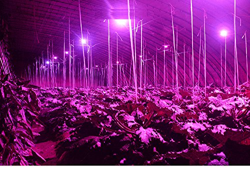 efficiency e27 led plant grow light 5w energy saving bright led light. Black Bedroom Furniture Sets. Home Design Ideas