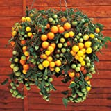 Suttons Seeds 150525 Tumbling Tom Yellow Tomato Seed