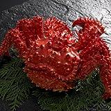 浜茹で花咲ガニ900g×1尾根室の花咲港で水揚げされる花咲蟹は大変貴重な蟹です。 ランキングお取り寄せ