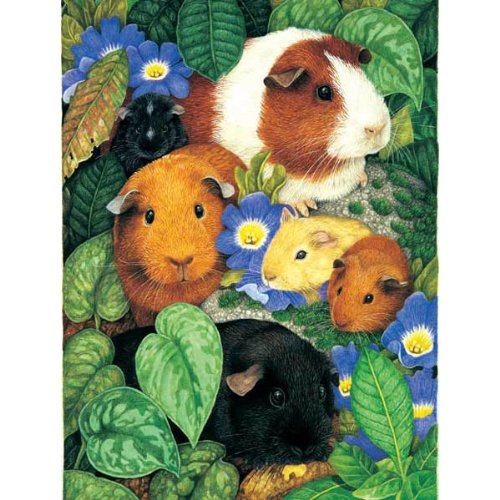 61TiaDf09nL Reviews Guinea Pigs Jigsaw Puzzle 100 Piece