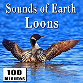 Sounds of Earth: Loons