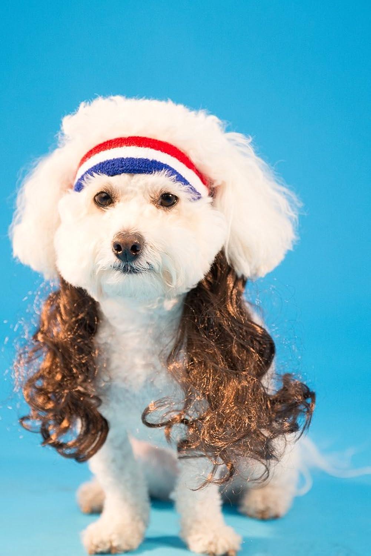 Dog Headband Mullet