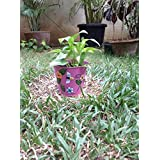 The Garden Store Tin Planter Large Pink
