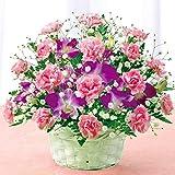 花キューピット スイート 母の日ギフト mt01yr-521203 (2016年5月7日・5月8日のいずれかに到着)